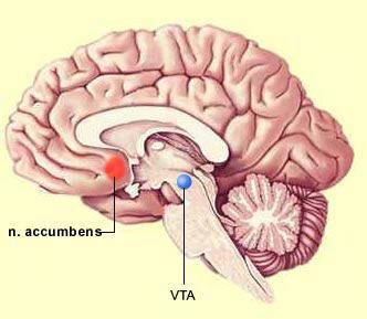 Núcleo-Accumbens-y-AVT-Adicciones-NeuroClass