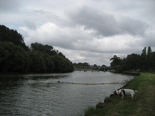 Big River Little Doggie