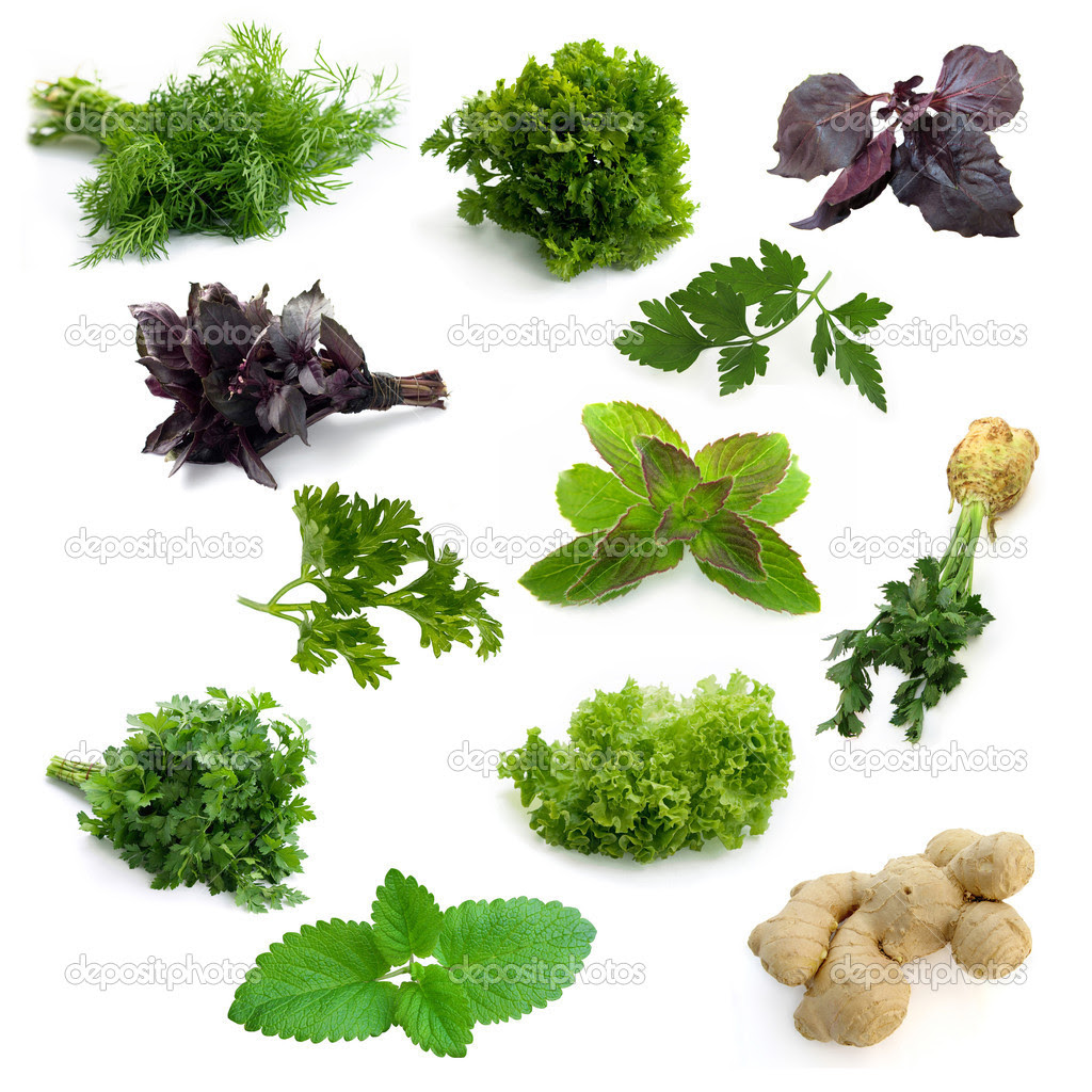 Aromatic herbs — Sto