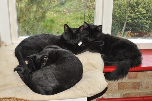 sleeptime in kittenopolis