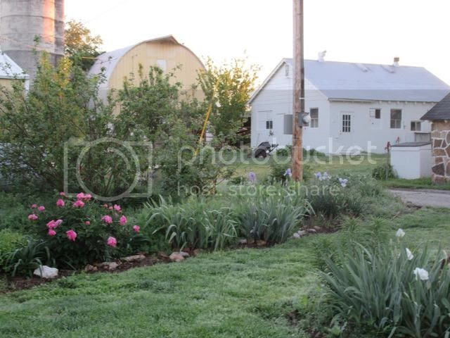 photo light pole bed with peonies and iris just starting_zpsvgjdxjrf.jpg