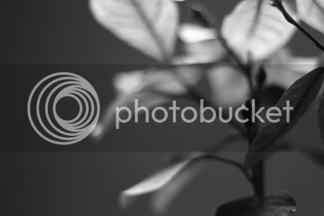photo _MG_8077_zpse6a21732.jpg