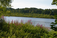 beaver pond 134