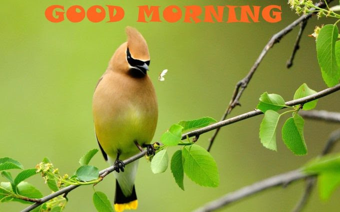 Good Morning Images With Cute Birds Good Morning Wishes For Mom