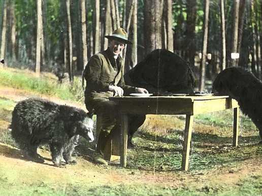 Bear_dinner_1922