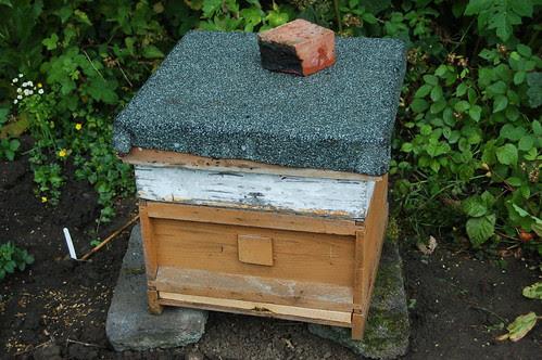 hives Jul 11 3