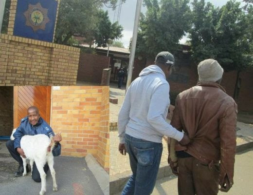 Update: Man Found Guilty Of Raping His Neighbour's Pregnant Goat In South Africa