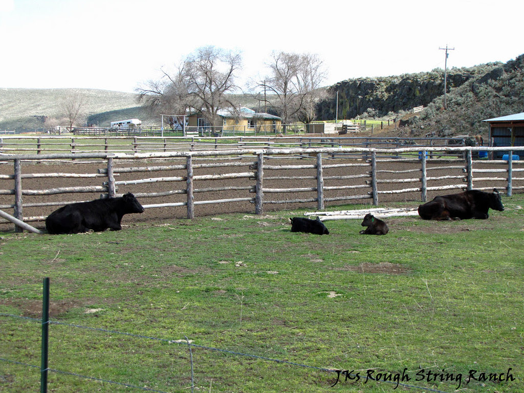 The CowGirls & Calves