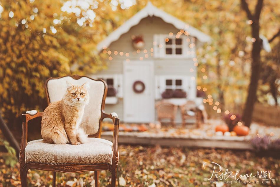 domek w ogrodzie jesień