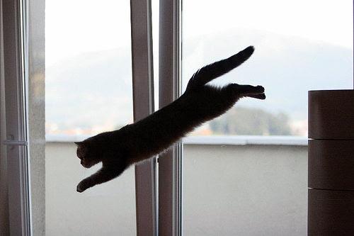 dica de fotografia animais gato pulando silhueta