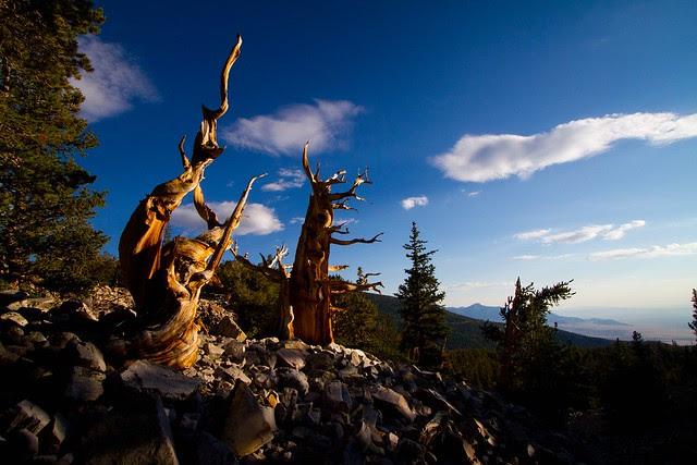 Great Basin National Park-7.JPG