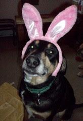 Tut_bunny_411f