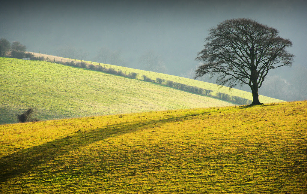 Stanmer Down, South Downs
