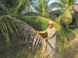José Cardoso da Silva, a farmer who settled in the Varzea de Sousa district in Northeast Brazil, stands next to a few coconut palms that he managed to save from the recent six-year drought, which ended in 2017, thanks to a brackish water well he drilled on his land. He also diversified his production with vegetables and fruit trees. Credit: Mario Osava/IPS