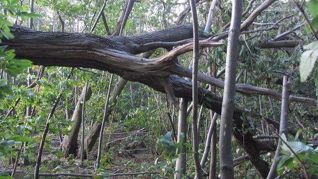 IMG_4466 St Jude storm damage 2013