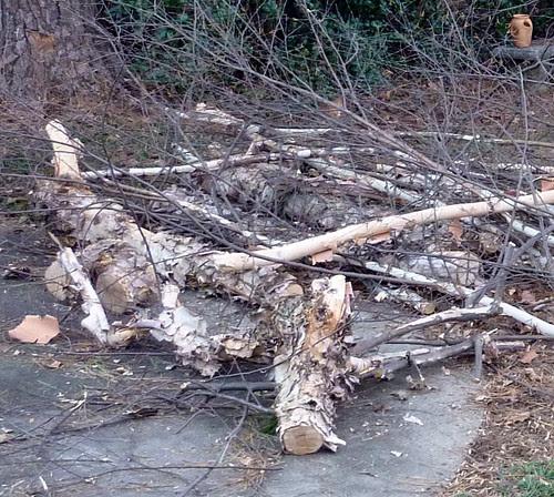 P1000144-2010-01-07-Birch-Logs