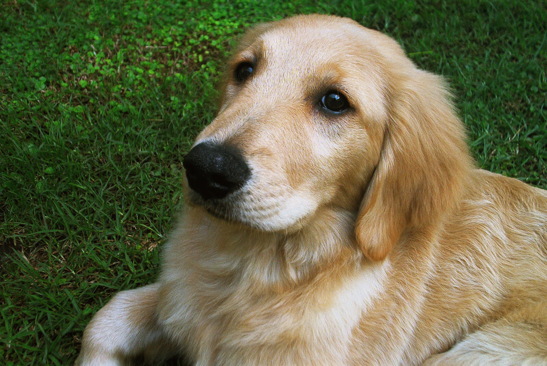 The Hardest Golden Retriever Quiz You'll Ever Take