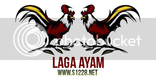 Download 850  Gambar Animasi Ayam Sabung HD Gratis