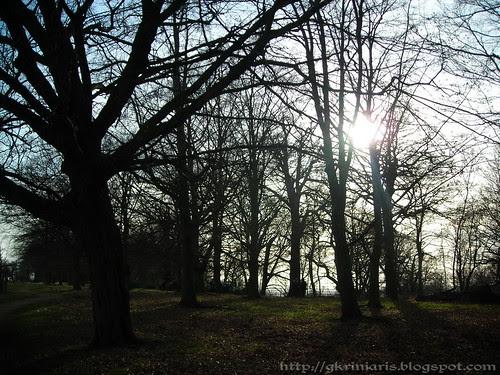 Sun through leafless trees