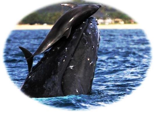 balena e delfino