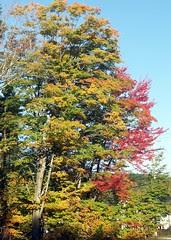 Foliage10609