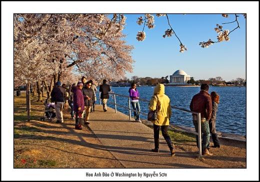 005 Mùa Xuân Washington