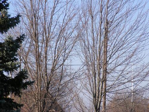 November View 2