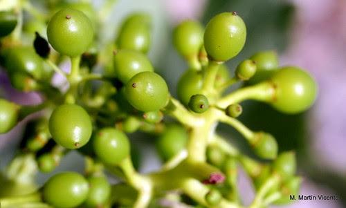 parra y uvas