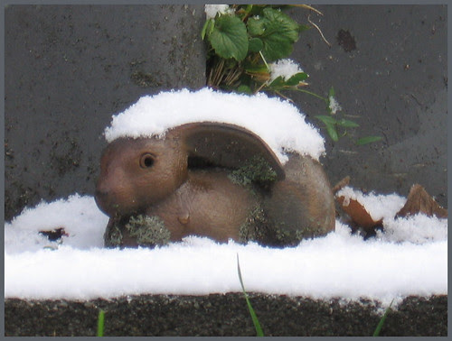 02 rabbit in snow