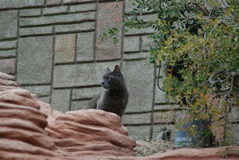 "Meet the Feral Cats of Disneyland. More ""cats on the job!"""