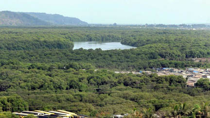 India's Mangrove Forests
