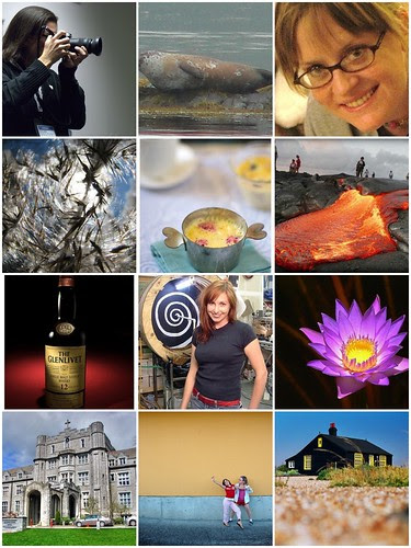 Flickr photo meme mosaic