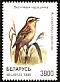 Aquatic Warbler Acrocephalus paludicola