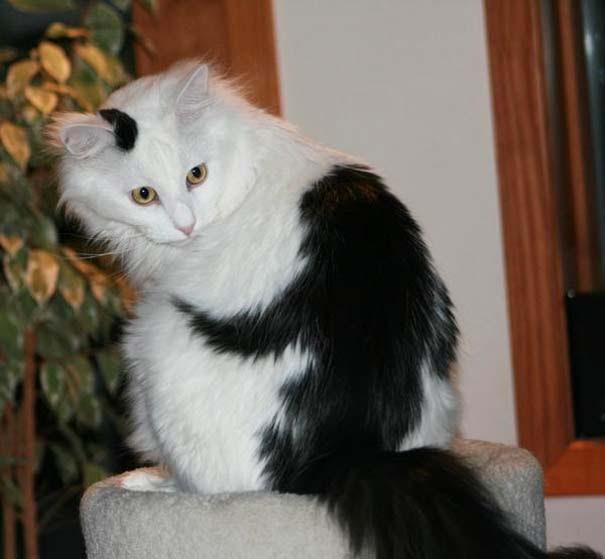 Γάτες που έγιναν διάσημες χάρη στα σημάδια της γούνας τους (10)