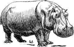 Hippopotamus by papapishu - This image was donated by Pearson Scott Foresman, an educational publisher, to Wikimedia Commons, and is thereby in the Public Domain. --- See http://commons.wikimedia.org/wiki/Category:Pearson_Scott_Foresman_publisher
