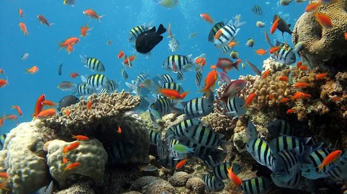 Cómo saber si los peces tienen estrés