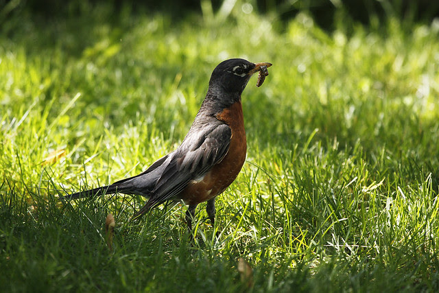 robin lunch