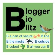 Blogger BioBlitz full-size logo
