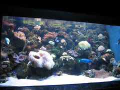 Aquarium at Ocean Adventure, Subic