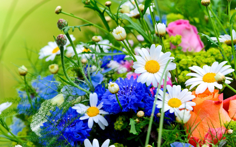 Flowers and herbs wa