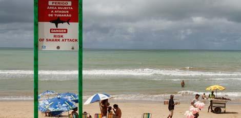 Ataque foi o 59º registrado pelo Cemit  em Pernambuco desde 1992 / Foto: Igo Bione/JC Imagem