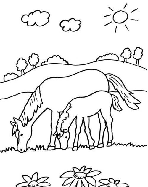 malvorlage pferd mit fohlen