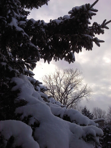 Snow in the Southern Tier