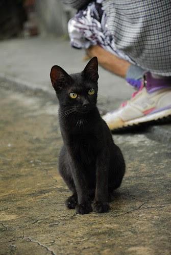 黑嚕嚕的小貓