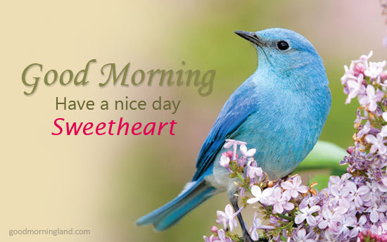 Good Morning Sweetheart Love Birds Images Good Morning Images