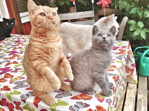 threesome and one suri-cat