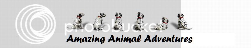 Amazing Animal Adventures