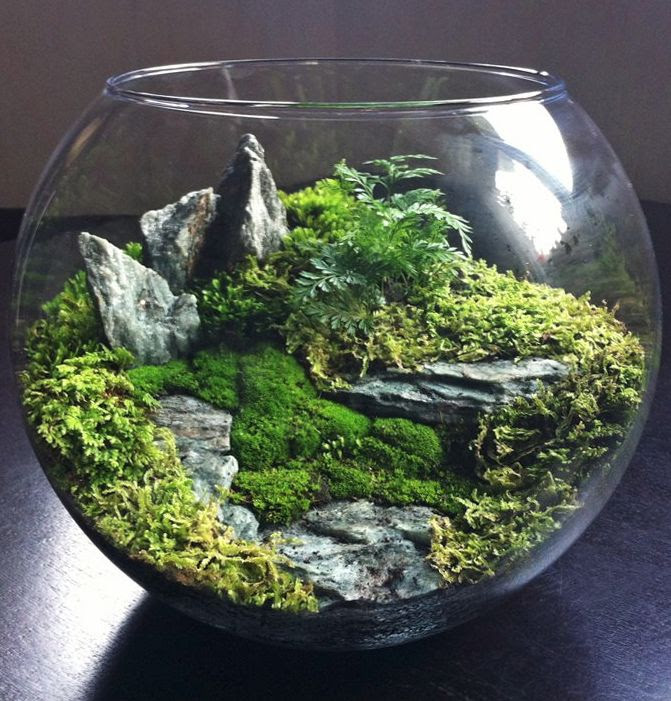 Terrarium / mini ecosystem by bioattic. Gorgeous levels, lush plantings, great rock outcrops.