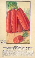 legume10 carotte