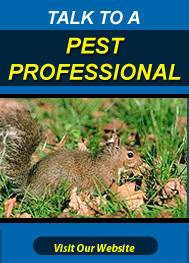 Squirrel Removal Passaic County
